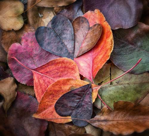 True-Autumn-Color-Palette---wefi_officia
